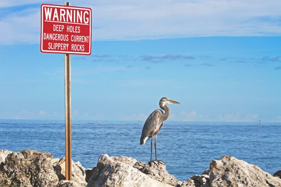 Florida biodiversity suffering from climate change consequences.