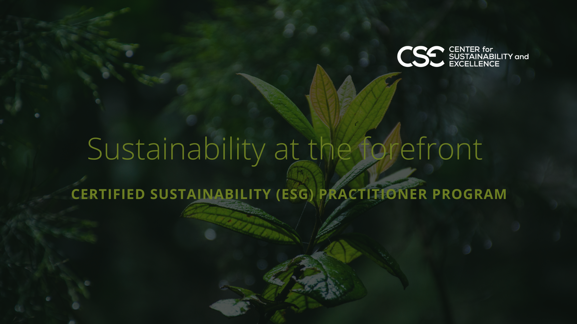 Sustainability Leaders from all over the globe join the digital Certified Sustainability (ESG) Program